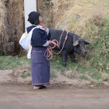 Farben über Farben – und ein Suchspiel: Otavalo